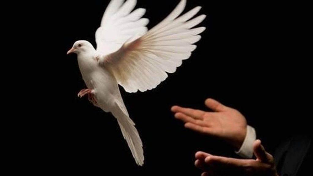 Chim bồ câu bay vào nhà có điềm báo gì? Nên đánh con gì?